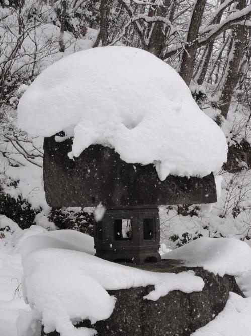 snow 'fro